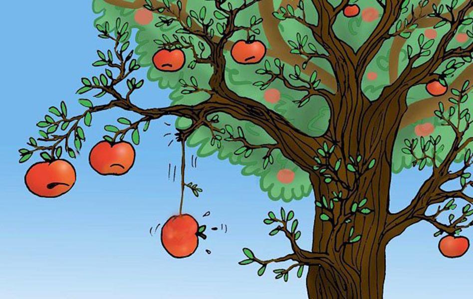 Chuyện buôn táo và tầm nhìn của 3 người chủ doanh nghiệp